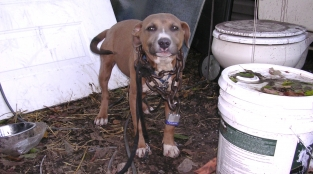 Offer Hope to a Lonely 'Backyard Dog'