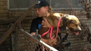 Help PETA Respond to Animals in Urgent Need