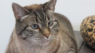 These Cats Love PETA's Spay/Neuter Clinic (Photos)