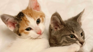 Support Our Spay and Neuter Work With a Monthly Gift