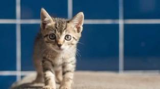 Cowabunga! Get a Load of These Real-Life Teenage Mutant Ninja Kittens