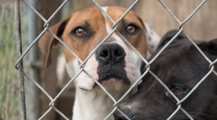 What's the Kindest Thing We Can Do for Pit Bulls?