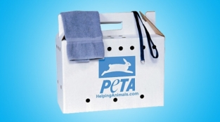 How To Make Your Own Animal Rescue Kit
