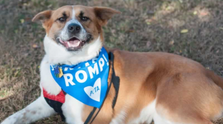 These Dogs Are So, So Happy to Be Adopted (Photos)