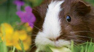 PETA Saves Animals