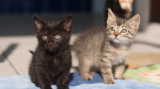 These Kittens Want to Do Your Housework (Photos)