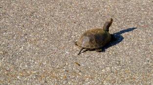 Turtles Need YOU This Season