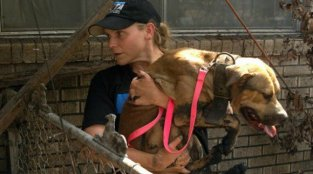 Helping Animals in the Midst of a Natural Disaster