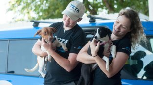 How PETA Helps Dogs, Cats, Rabbits, and Other Animal Companions