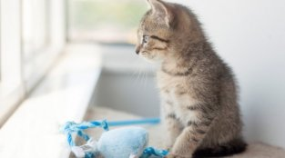 Kitten PETA Rescued From Car Engine Now Needs a Home