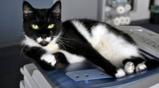 Want to Use the Copier? You'll Have to Ask the 'Copycat'