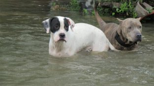 Will Your Animal Companions Be Protected in a Fire, Hurricane, or Other Disaster?