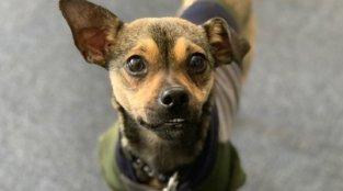 PETA Fieldworker's Keen Eyes Save Dog's Life
