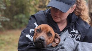 PETA's Local Work October-December 2019