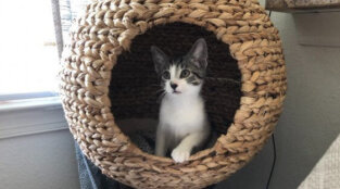 Kittens Hope to Shelter in Place at Your Place