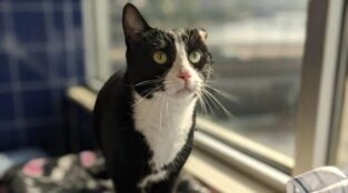 Snapchat Saved This Cat