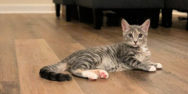 Are You 'Kitten' Me? Tiny Cat Almost Kicked Out on the Street