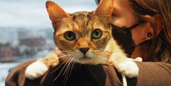 Rescued Cat Puts the 'Purr' in Pearl