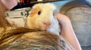 What's Up, Jax? Rescued Guinea Pig Loves Carrots