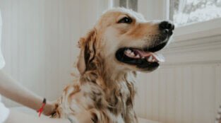 Do's and Don'ts When Grooming Your Dog at Home